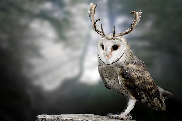 Nature, Animal World, Animal, Bird, Owl, Antler