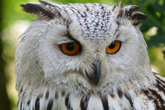Owl, Bird, Animal, Eagle Owl