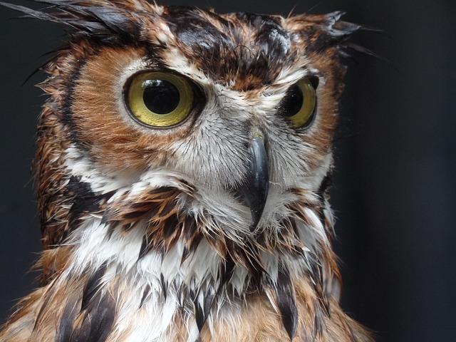 Owl, Nature, Bird, Feathers