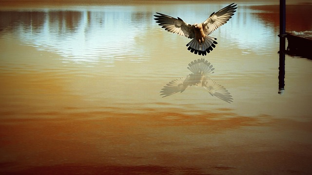 Lake, West, By The Dol, Reflection, Bird, Owl, Nature
