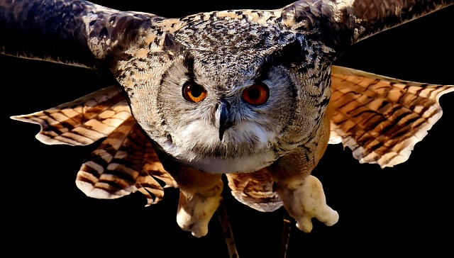 Owl, Bird, Feather, Cute, Plumage, Birds, Animal