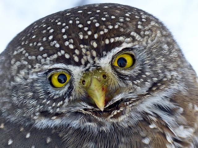Owl, Young, Animal, Bird, Bird Of Prey, Wildlife
