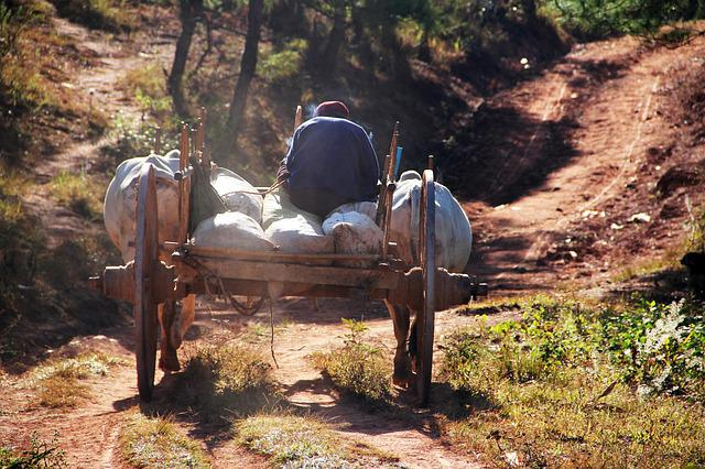 Oxcart, Back, Drive