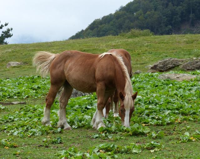 Horses, Prado, Pacer, Freedom, Val D'aran, Couple