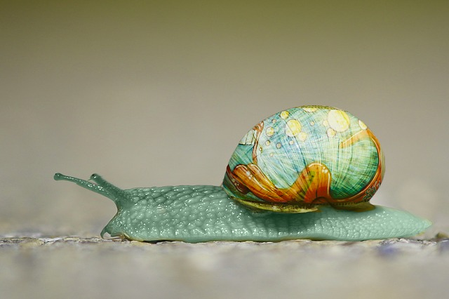 Snail, Graffiti, Animal, Unreal, Art, Shell, Painted