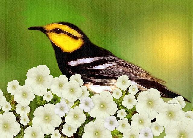 Warbler, Bird, Nature, Painting, Flowers, Wildlife