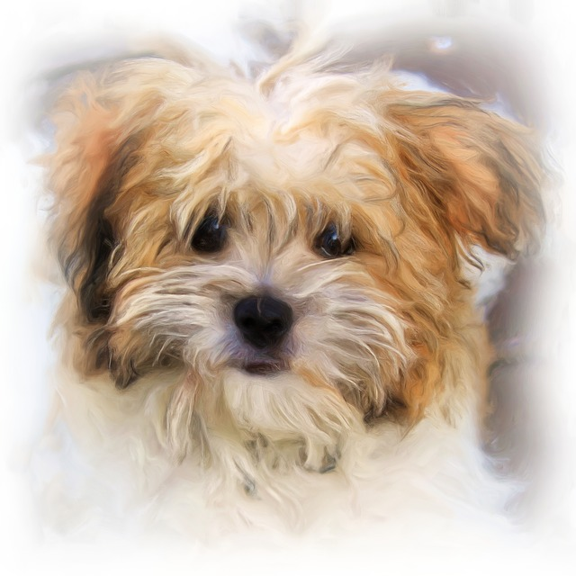 Painting, Oil Painting, Photo Painting, Dog, Terrier