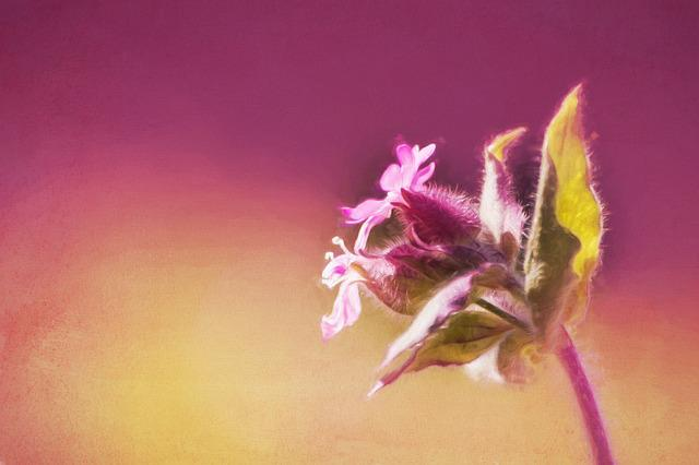 Image, Painting, Digital Painting, Paint, Flower