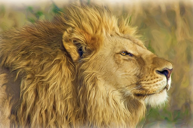 Painting, Oil Painting, Photo Painting, Lion, Mane