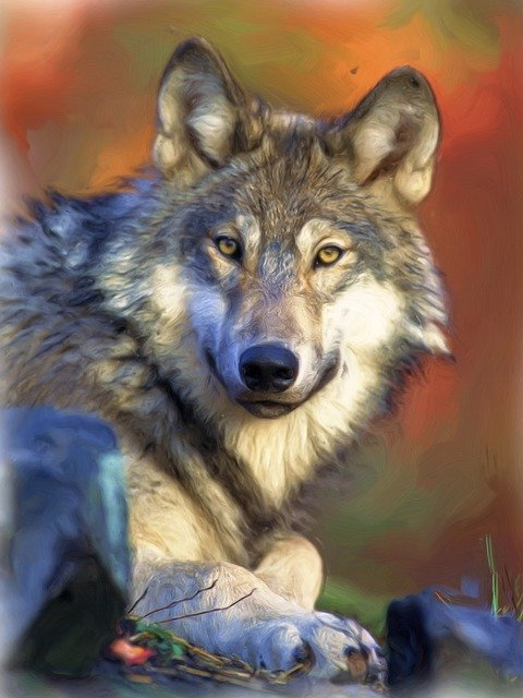 Painting, Oil Painting, Photo Painting, Wolf, Wolf Head