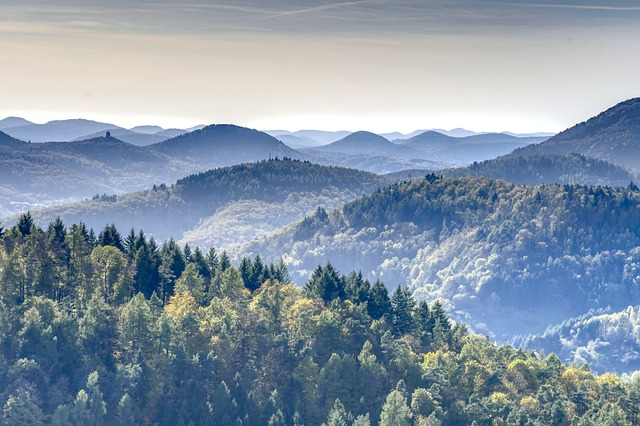 Mountains, Forest, Palatinate, Palatinate Forest, Hdr