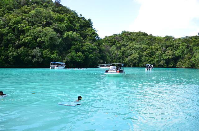 Dolphin, Palau, Beach, Dolphin Watching, Dolphin Show