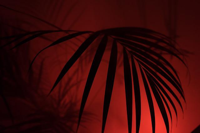 Palm, Diffuse, Art, Hip, Hipster, Fog, Neon, Color
