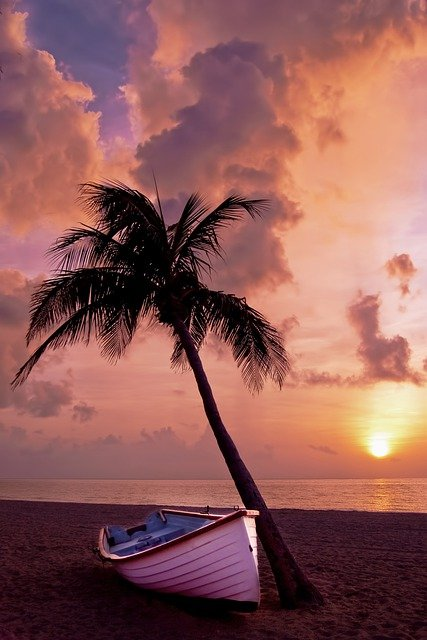 Palm Tree, Palm, Ocean, Summer, Vacation, Boat, Beach