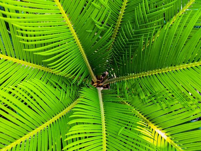 Palm, James, Palm Tree, Close Up