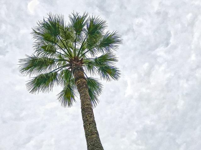 Palm, Sky, Clouds, Beach, Cloudiness, Hell