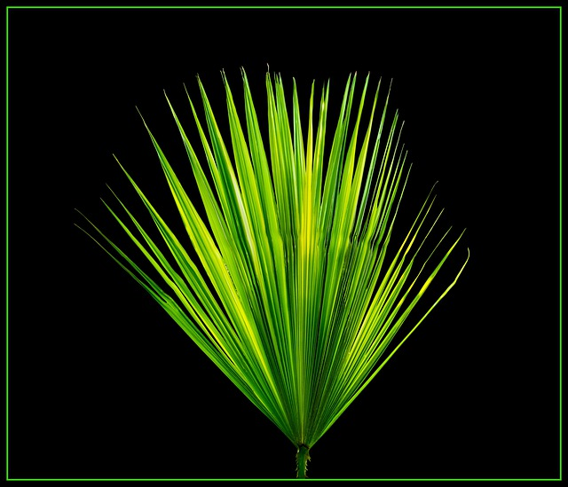 Palm Leaf, New Leaf, Palm Fronds