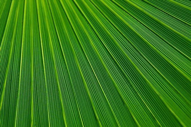 Leaf, Plant, Background, Palm, Green, Lines, Texture