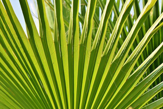 James, Palm, Leaf, Palm Fronds, Palm Tree, Vacations