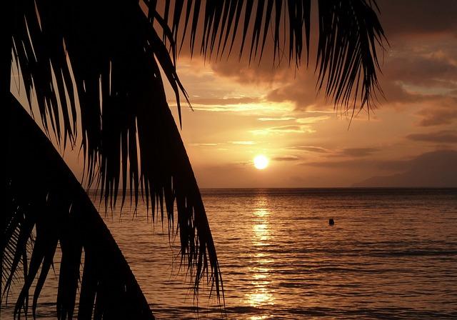 Sunset, Palm Trees, Beach, Golden