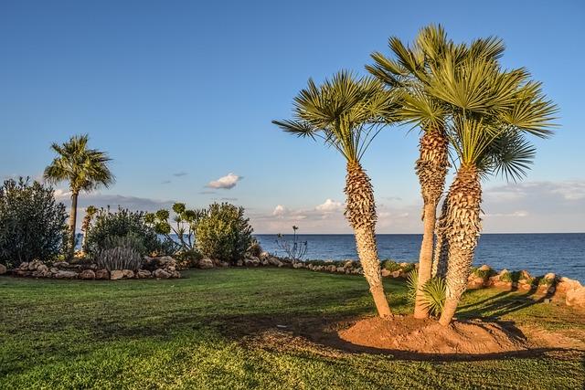 Landscaping, Garden, Palm Trees, Nature, Sky, Landscape