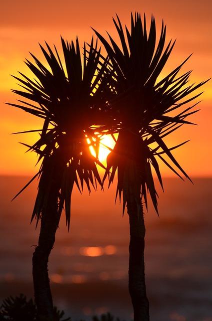 Palm Trees, Palms, Exotic, Sunset, Korfu, Ocean