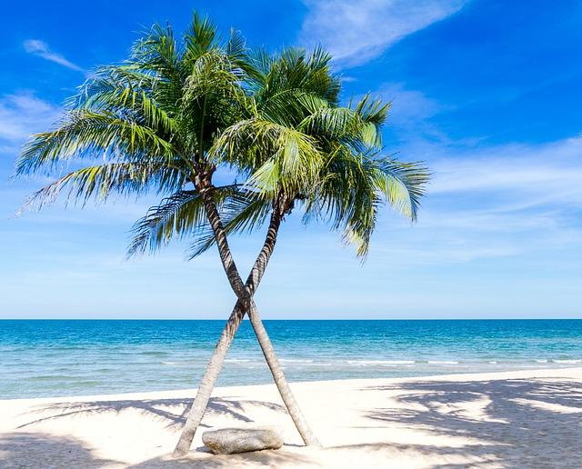 Beach, Palm Trees, Sea, Seascape, Horizon