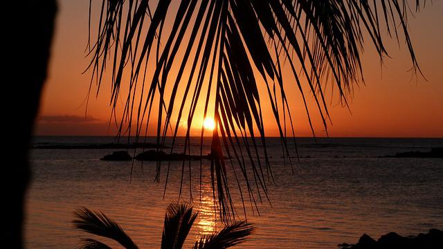 Mauritius, Sunset, Palm Trees, Sea