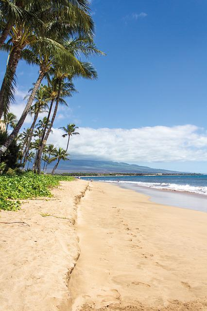 Beach, Palms, Hawaii, Maui, Landscape, Sand
