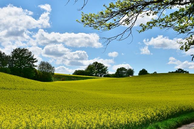 Oilseed Rape, Landscape, Field, Panorama, Agriculture