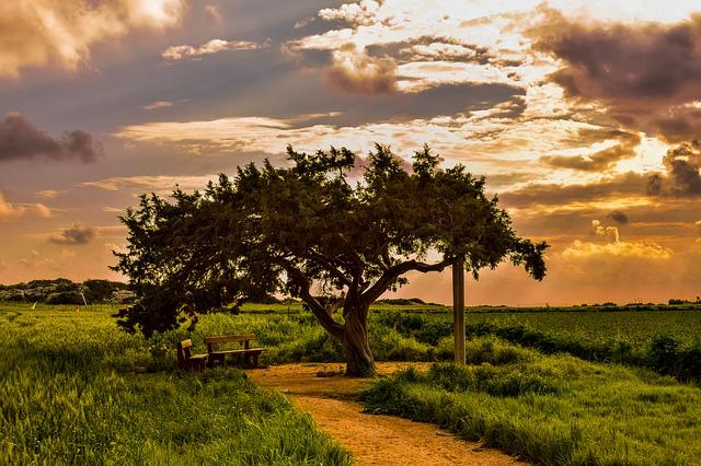 Tree, Landscape, Nature, Panoramic, Sky, Clouds, Sunset