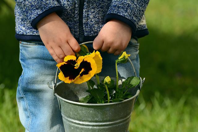 Pansy, Child, Children's Hands, Hands, Mother's Day