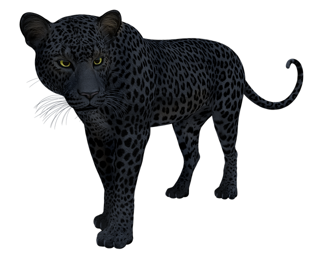 Black, Panther, Leopard, Jaguar, Cat, Big, Wildlife