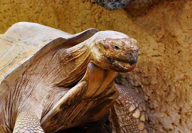 Turtle, Tortoise, Reptile, Animal, Panzer