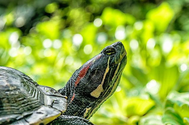 Turtle, Water, Water Turtle, Panzer, Reptile, Nature