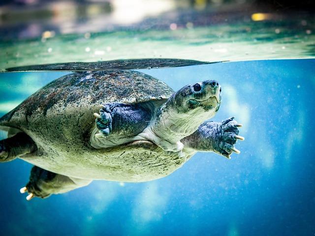 Turtle, Water Turtle, Water, Swim, Zoo, Panzer
