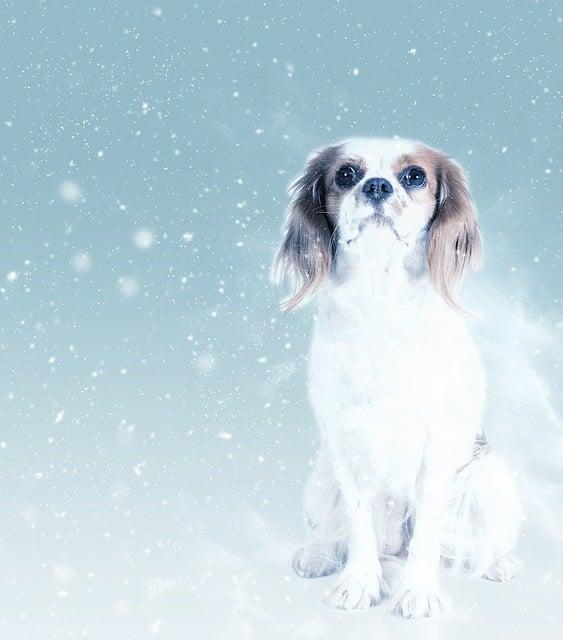 Dog, King Charles, Snow, Art, Scrapbooking, Paper