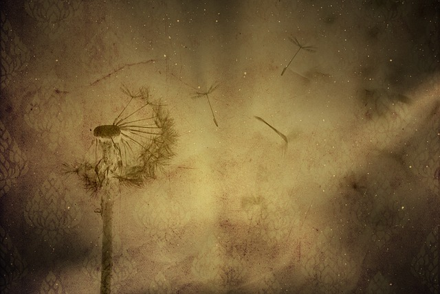 Texture, Background, Wallpaper, Dandelion, Plant, Paper