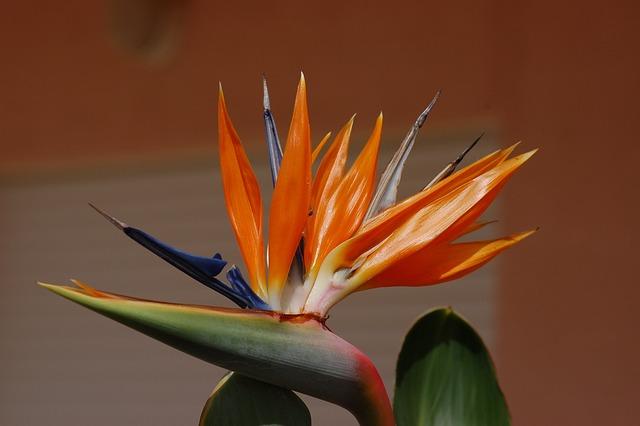 Strelitzia, Flower, Garden, Paradise, Plant, Tropical