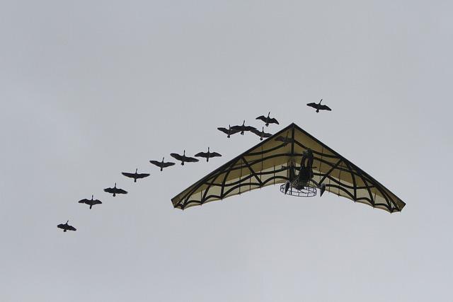 Geese, Aircraft, Puy Du Fou, Paragliding, Flight, Human