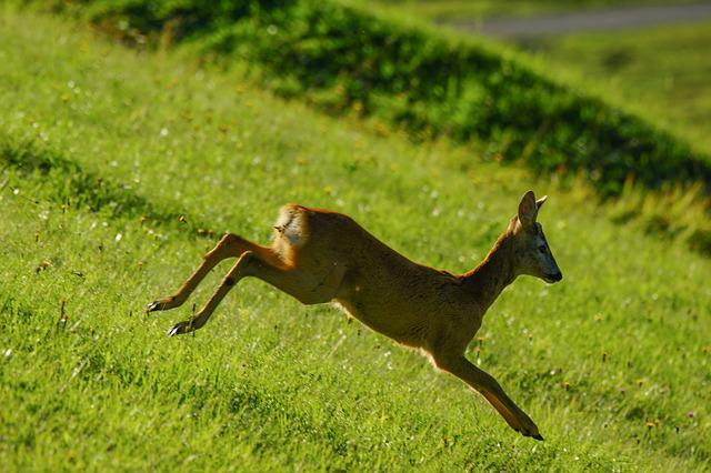 Roe, Animal, Wild, Animals, Nature, Fawn, Park