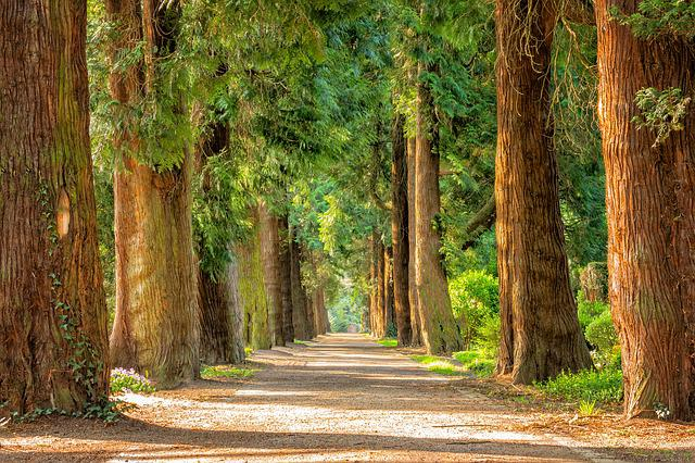 Avenue, Trees, Away, Walk, Green, Nature, Park