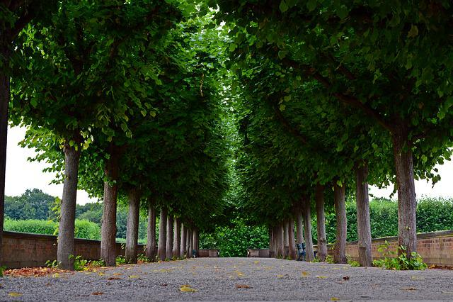 Avenue, Trees, Park, Herrenhäuser Gardens, Hanover