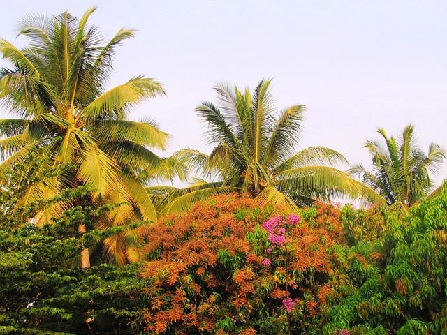 Park, Sadhankeri, Trees, Palms, Coconut, Flowering