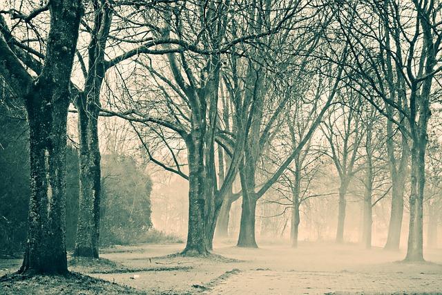 Trees, Winter Trees, Park, Fog, Misty, Golden Glow