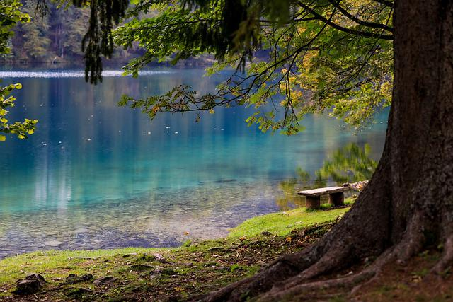 Lake, Forest, Park, Bench, Tree, Wood, Water