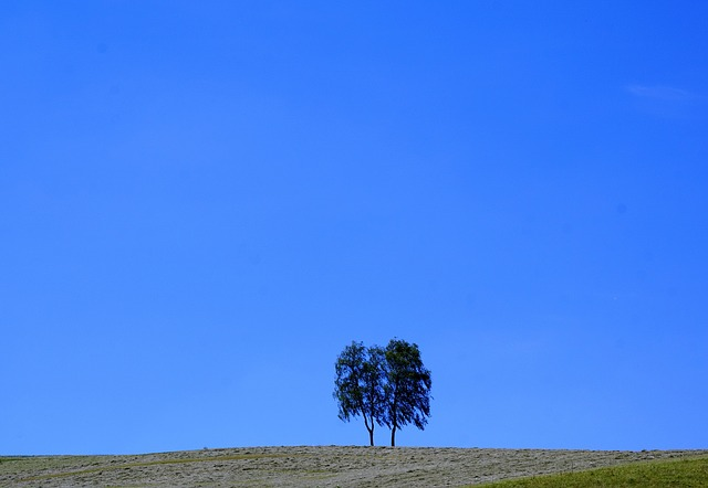 Tree, Meadow, Aldingen, Rest, Nature, Landscape, Park