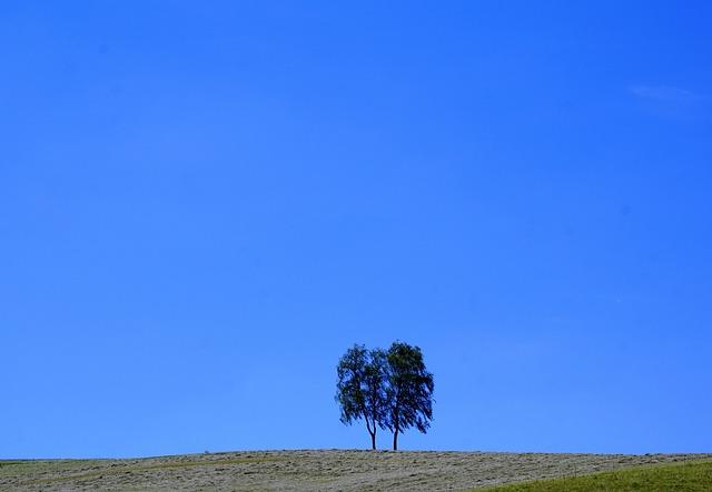 Tree, Meadow, Aldingen, Rest, Nature, Landscape, Park