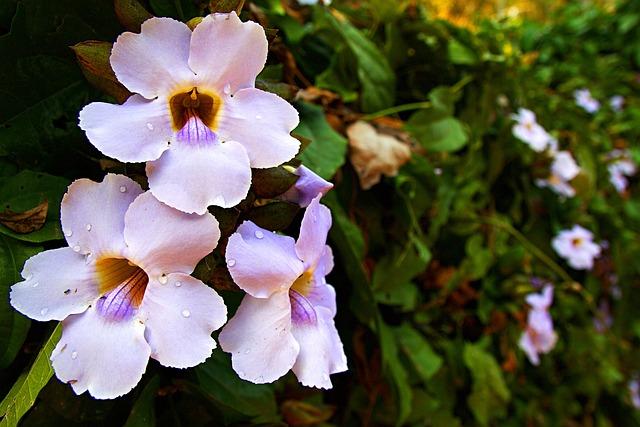 Chiang Rai, Thailand, Flower, Close, Park, Nature