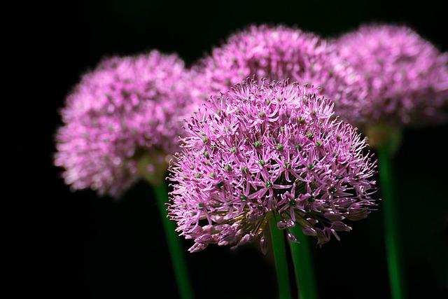 Garden, Nature, Park, Flower, Blume, Lila, Color